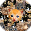 Kitten Faces Pro icon