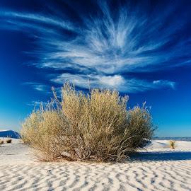 Desert Perspective by Craig Bill - Nature Up Close Sand ( sand, dunes, sandhills, white sands )