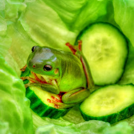 Frog Salad by Angelica Glen - Animals Amphibians ( cucumber, frog, green, lettuce,  )