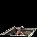Basement Horse