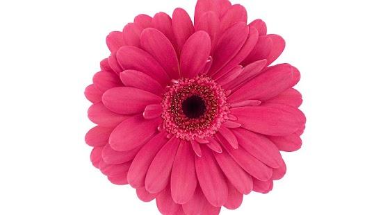 Фото цветов распечатать