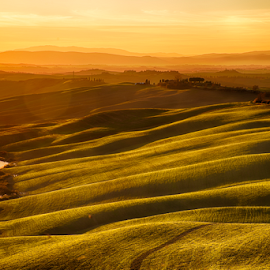 Golden sunset by Maurizio Martini - Landscapes Sunsets & Sunrises ( countryside, seasonal, vineyard, italian, tuscany, farmland, house, vegetation, olive, tree, villa, nature, italia, winery, orcia, hill, toscana, vine, mysterious, agriculture, rural, country, european, dawn, scene, view, haze, europe, grapevine, farmhouse, road, beauty, landscape, spring, farm, idyllic, cypress, italy, green, scenic, morning, field, fog, sunset, background, meadow, sunrise, scenery, tuscan, garden )