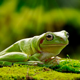 Frog by Chev Chenko - Animals Amphibians
