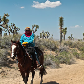 Get Along... by Wendy Smith  - Landscapes Deserts ( joshuatree, desert, california, horse, wrangler )