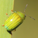 Green Strip Leaf Beetle