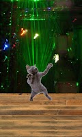 Screenshot of Dancing cat