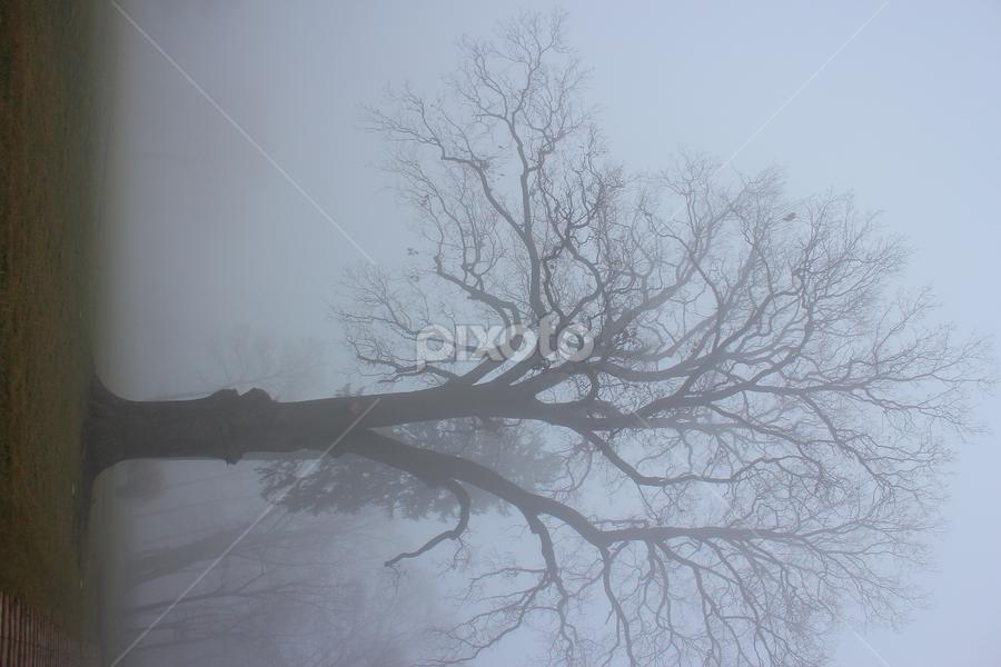 by Seba Mnr - Nature Up Close Trees & Bushes