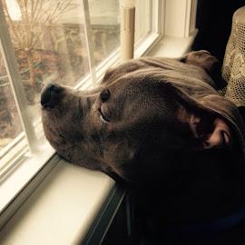 Watch Dog by Kate Carnaroli - Animals - Dogs Puppies