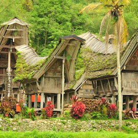 Tongkonan House at Ketekesu Village  by Muchamad Irfan - Buildings & Architecture Homes ( toraja, south sulawesi, indonesia, tongkonan house )