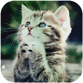 Free Download Cute Cat Wallpapers APK for Samsung
