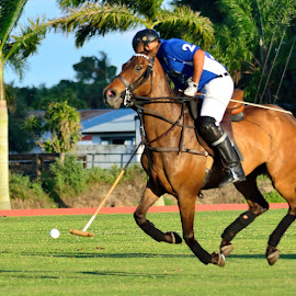 West Palm Beach Polo by Terry Barker - Sports & Fitness Other Sports