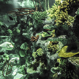 Reef by Kerry Smith - Landscapes Underwater ( stormy, selective color, reef, underwater, fish, moody )