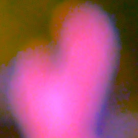 Heart by Stephen Barrett - Abstract Patterns