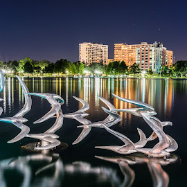 Night Landing by Tom Moors - City,  Street & Park  Night ( lake eola, sculpture, reflection, florida, orlando, night, lake, birds, city )