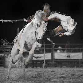 Over the Top by Gary Want - Sports & Fitness Rodeo/Bull Riding ( queensland, locations, australia, rodeo, sport )