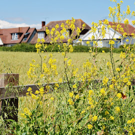 English village by Nadezda Tarasova - City,  Street & Park  Neighborhoods ( countryside, home, abode, hadleigh, cozy, typically, europe, hamlet, house, architecture, travel, yellow, rustic, england, nature, dwelling, village, cottage, essex, sunny, lifestyle, idyllic, building, uk, picturesque, peaceful, british, green, tourism, property, postcard, sunlight, rural, roof, field, fence, urban, season, accommodation, outdoor, peace, meadow, summer, tranquility, town, view, day, rest, english, estate )