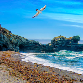 The Soar to Paradise by Jamie Valladao - Landscapes Beaches ( water, gull, seagull, wave, rock, ocean, beach, gualala,  )