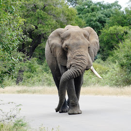 Get out of my way. by Carine Smit - Animals Other Mammals