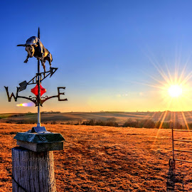 Bull by Derrill Grabenstein - Landscapes Prairies, Meadows & Fields ( field, wind vain, sunset, bull pasture, landscape )