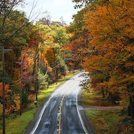 The Foliage 2014 by Nelin Reisman - Transportation Roads ( nature, fall_colors, autumn, fall, landscape.,  )