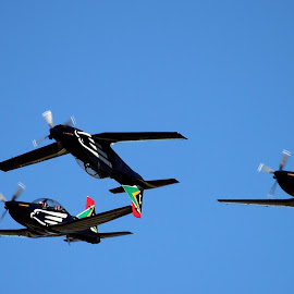 Silver Falcons by Adéle van Schalkwyk - Transportation Airplanes ( sky, fly, blue, airplane, silver, falcons,  )