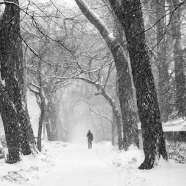 Central Park in Winter by Gina Gomez - Landscapes Weather ( winter landscape, winter, snowstorm, winter image, winter photo, new york winter, snowstorm photo, central park winter, photos of snow, snow landscape )