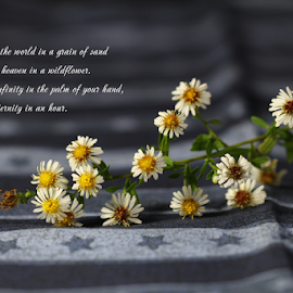 To see a world in a grain of sand, by Dipali S - Typography Quotes & Sentences ( ecard, flora, botany, illustration, white, twig, caption, typography, flower, floral, blossom, wild flowers )