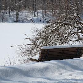 Bench by the Lake by Marcia Taylor - Novices Only Landscapes (  )