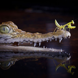 by Adi Parmana - Animals Reptiles