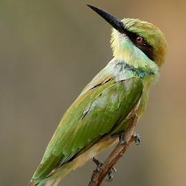 Different Pose by Sankaran Balaji - Animals Birds