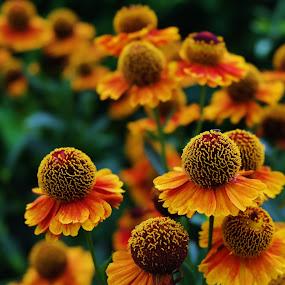 Pretty In Orange by Lori Rose - Flowers Flower Gardens ( flowers,  )
