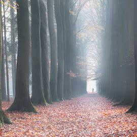 The runner by Pascale Schotte - Landscapes Forests ( frog, bruges, belgium, forest, runner, morning, landscape, misty )
