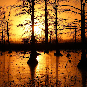 Evening Bliss  by Karin Pelton - Landscapes Sunsets & Sunrises ( orange, sunset, trees )