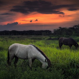 sunset with horse by Ahmad Sahroni - Instagram & Mobile Other