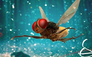 Screenshot of Eega