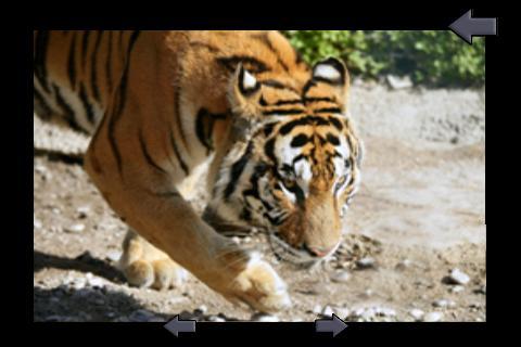玩休閒App|捕捉儿童的丛林动物免費|APP試玩