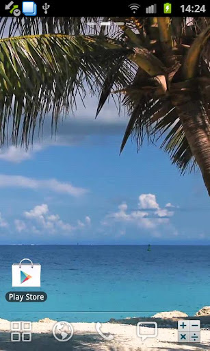 Beach Palm Tree Live Wallpaper