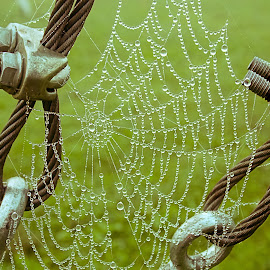 A cobweb full the morning dew. by Željko Jelavić - Nature Up Close Webs ( cobweb, web )