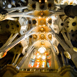 by Vanessa Lima - Buildings & Architecture Public & Historical ( church, ceiling, architecture )