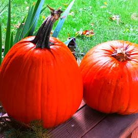 Pumpkins by Linda Lewis - Nature Up Close Gardens & Produce ( fall orange pumpkins, pumpkin produce, pumpkins, decorative pumpkins, orange pumpkins, selective color, pwc )