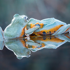 Do not be sad I love you by Hendy Mp - Animals Amphibians ( #nature #animal #frog )