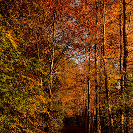 Autumn trail by Gene Myers - Landscapes Forests ( shotsbygene, sandy bottom, color, autumn, fall, trail, trees, forest, landscape, leaves, gene myers, path, nature )