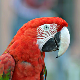 Parrot by Mubashir Nazir - Novices Only Wildlife