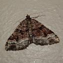 Epyaxa Moth