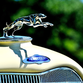 Lincoln greyhound by Erin Czech - Transportation Automobiles ( hood ornament, lincoln, automobile, silver, greyhound )