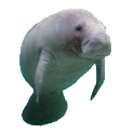 Manatee Sticker icon
