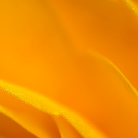 Yellow Abstract by Nico Carbajales - Abstract Macro
