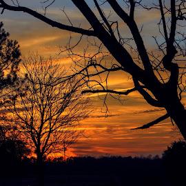 North Carolina Sunset by Barton Bishop - Landscapes Sunsets & Sunrises ( orange, blue, carolina, sunset, trees, landscape, north carolina )