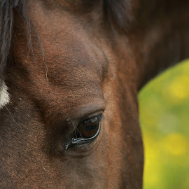 A Touch of Soul by Jacqui Sjonger - Animals Horses ( farm, heart, life, gentle, nature, horse, soul, summer, close up )