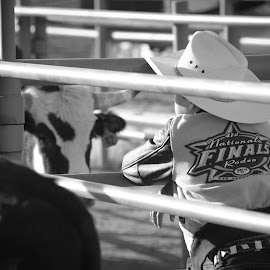 by Dacey Uthoff - Sports & Fitness Rodeo/Bull Riding